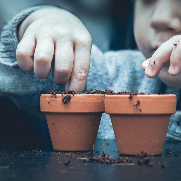 Content-Seeding – wesentlicher Bestandteil des Content Marketings Bild